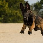 Kvalitní granule pro psy: provedeme vás procesem jejich výběru