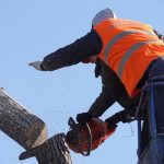 Nejvhodnější doba pro kácení a redukci stromů? Volte zimní měsíce
