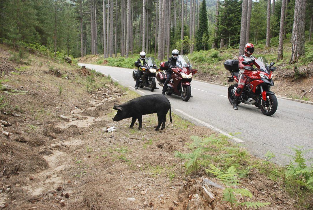 Motorcycling Mountain Roads Corsica - dendoktoor / Pixabay